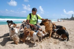 Photo #1: Dog walking. Pet Sitting. Pet Waste Removal. Grooming...