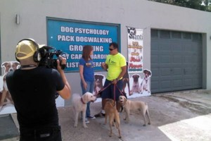 Photo #5: Dog walking. Pet Sitting. Pet Waste Removal. Grooming...