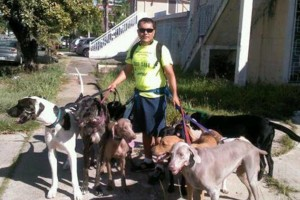 Photo #6: Dog walking. Pet Sitting. Pet Waste Removal. Grooming...
