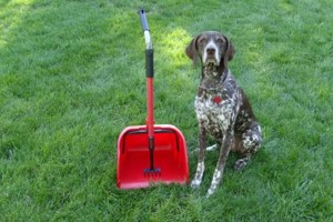 Photo #7: Dog walking. Pet Sitting. Pet Waste Removal. Grooming...