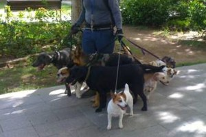 Photo #10: Dog walking. Pet Sitting. Pet Waste Removal. Grooming...