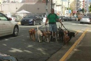 Photo #11: Dog walking. Pet Sitting. Pet Waste Removal. Grooming...