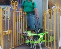 Photo #13: Dog walking. Pet Sitting. Pet Waste Removal. Grooming...