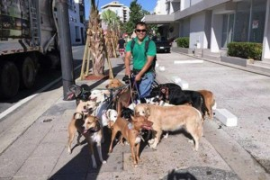 Photo #14: Dog walking. Pet Sitting. Pet Waste Removal. Grooming...