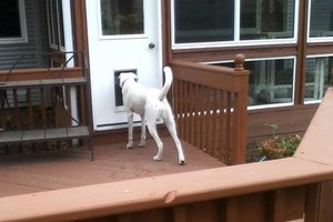 Photo #6: Cherie's Dog Sitting in My Home. $25 Fenced