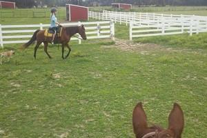 Photo #2: Quiet Horse Boarding Facility ~ Full & Self Care!