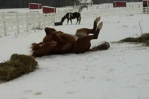 Photo #6: Quiet Horse Boarding Facility ~ Full & Self Care!
