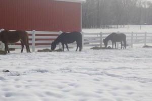 Photo #8: Quiet Horse Boarding Facility ~ Full & Self Care!