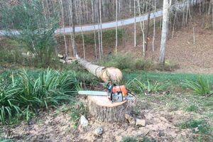 Photo #1: Good Olboyz - tree services