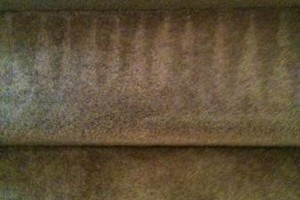 Photo #22: BRIGHT CARPET. QUALITY CARPET & UPHOLSTERY CLEANING / AIR DUCT CLEANING