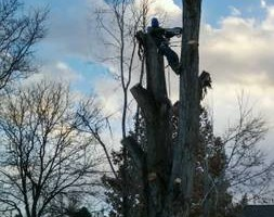 Photo #2: Alex's tree removal