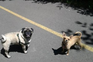 Photo #1: Nurtured Pet Dog Boarding