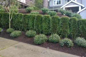 Photo #5: Landscaping Service (trimming, pruning,  weed control,  fertilizing)