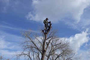 Photo #3: TREE SERVICE. FORESTREE LLC. LIC-INS-CER. FREE QUOTES!