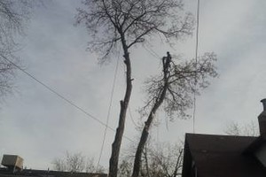 Photo #2: TREE SERVICE. FORESTREE LLC. LIC-INS-CER. FREE QUOTES!