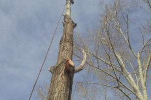 Photo #1: TREE SERVICE. FORESTREE LLC. LIC-INS-CER. FREE QUOTES!