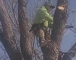 Photo #2: Tree Away! Licensed & Insured!