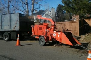 Photo #1: Tree Away! Licensed & Insured!