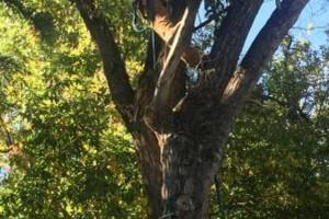 Photo #5: E&C Tree-Service & Landscape
