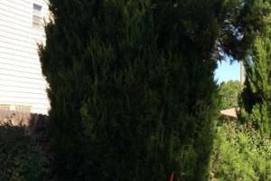 Photo #4: E&C Tree-Service & Landscape