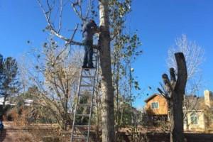 Photo #1: E&C Tree-Service & Landscape