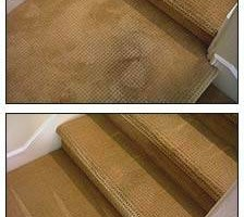 Photo #4: Allergen Free Host Dry Carpet Cleaning