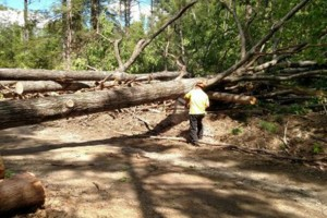 Photo #4: Tree Cutting Services (All Seattle Area)