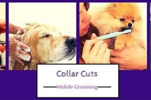 Photo #5: Collar Cuts Mobile Pet Grooming, We come to you!