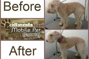 Photo #4: Collar Cuts Mobile Pet Grooming, We come to you!