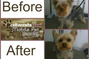 Photo #2: Collar Cuts Mobile Pet Grooming, We come to you!