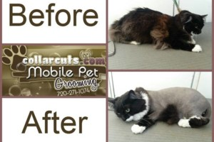 Photo #1: Collar Cuts Mobile Pet Grooming, We come to you!