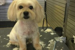 Photo #9: Dog grooming & self wash. DQ PET SHOP