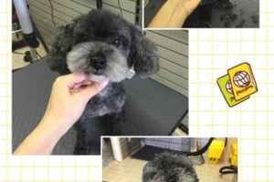 Photo #4: Dog grooming & self wash. DQ PET SHOP