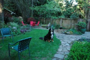 Photo #1: Jean's Loving Canine Care