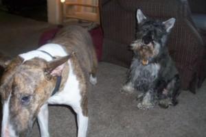 Photo #2: Dog sitter Joel