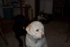Photo #1: Dog sitter Joel
