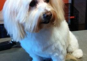 Photo #1: 25% of Your First Full Service Groom. EarthDog Denver