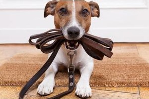Photo #1: Looking for a Pet Sitter / Dog Walker?! We can help!