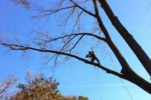 Photo #3: Arborite Tree Service - tree care and removal