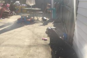 Photo #1: YARD CLEAN OUTS