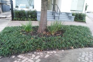 Photo #14: Refresh you garden.. Clean up, lawn care...