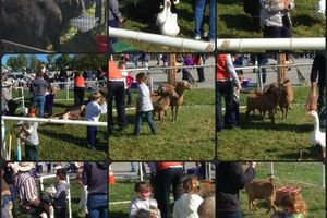 Photo #8: Pony Rides and Farm Petting Zoo ~ We come to you!