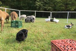 Photo #5: Pony Rides and Farm Petting Zoo ~ We come to you!