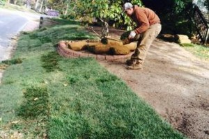 Photo #2: Mary's Landscaping Svcs...