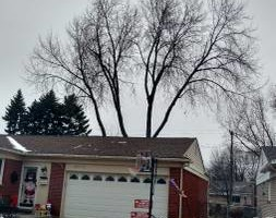 Photo #3: Madison Tree Service, LLC