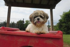 Photo #9: 1st Day FREE!!! Dog Boarding-33 years exp.