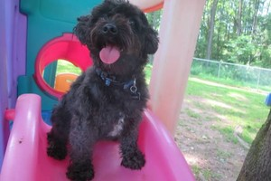 Photo #5: 1st Day FREE!!! Dog Boarding-33 years exp.
