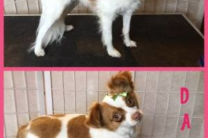 Photo #11: Professional Dog & Cat Grooming