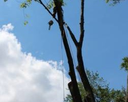 Photo #1: TREE CUTTING by Chainsaw Man