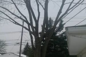 Photo #1: Firewood, Tree Removals, Trims, Stumps Removals